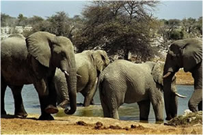 Connecting Concepts: Ecology/Population Dynamics 3: Elephant Population Growth